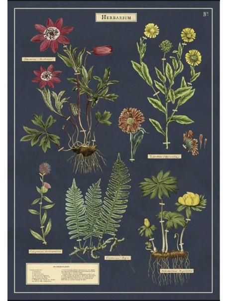 Affiche Herbier