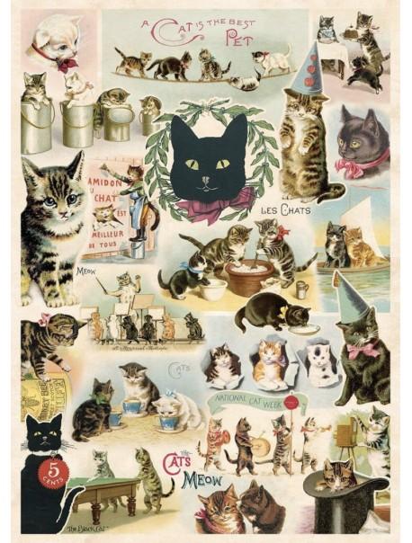 Affiche Chat Vintage