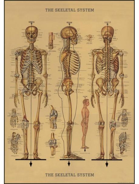 Affiche Squelette