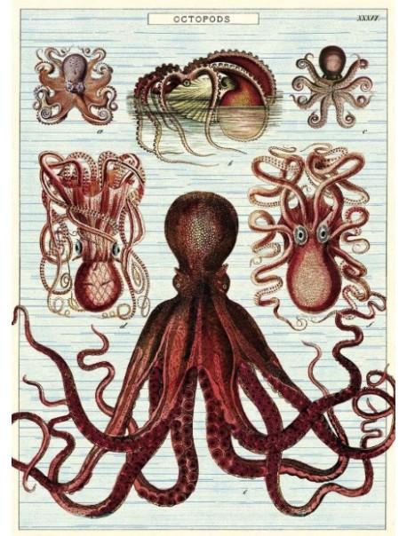 Affiche Octopus