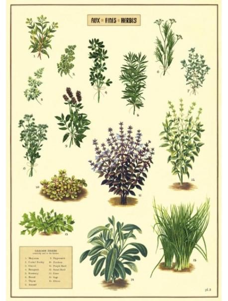 Affiche Herbes