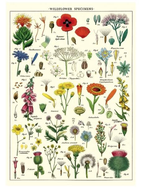 Affiche wildflowers