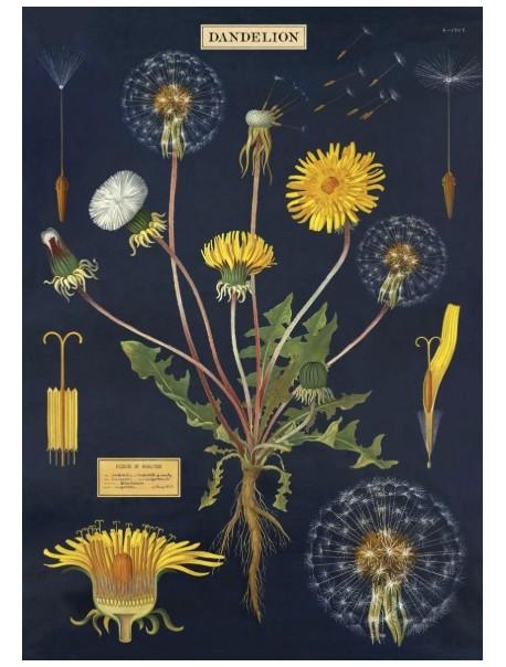 Affiche Dandelion