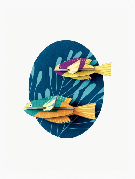 Spanish Hogfishes