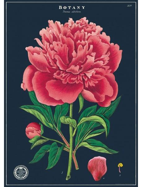 Affiche Botanique 3