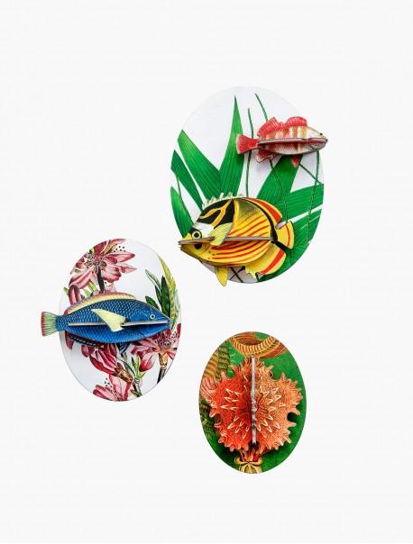 Collectors Box Fishes, Dybdahl Vol.2