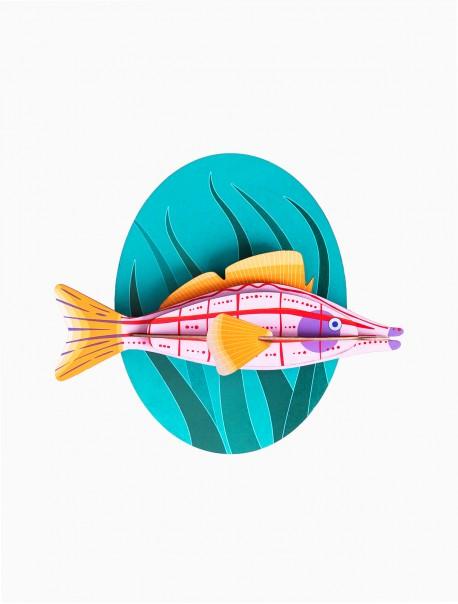 Longnose Hawk Fish