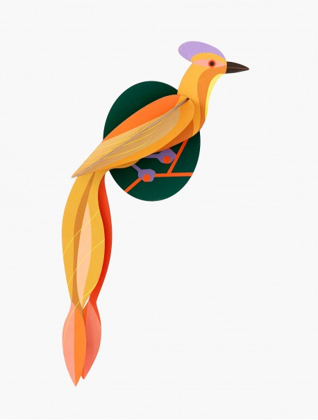 Paradise Bird Olango